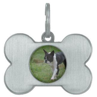 Perrito de Boston Terrier Placas Mascota