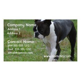 Perrito de Boston Terrier Tarjeta De Negocio