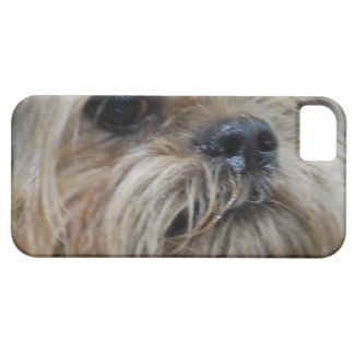 Perrito de Bruselas Griffon iPhone 5 Case-Mate Cárcasa