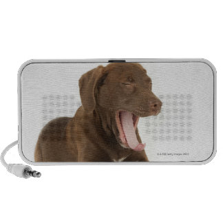 Perrito de cuatro meses del laboratorio del chocol iPod altavoces
