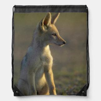 Perrito de espalda negra del chacal (Canis Mochila