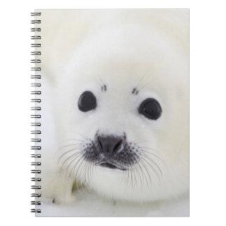 Perrito de foca de Groenlandia del bebé en el hiel Cuaderno