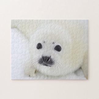 Perrito de foca de Groenlandia del bebé en el hiel Rompecabeza