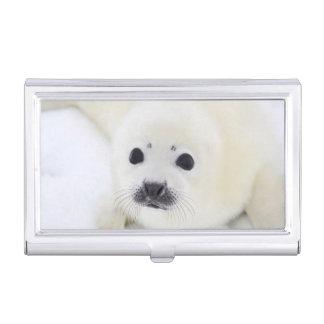 Perrito de foca de Groenlandia del bebé en el Caja De Tarjetas De Presentación