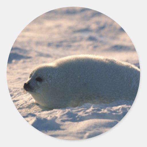 Perrito de foca de Groenlandia en nieve Etiquetas