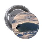 Perrito de foca de Groenlandia en nieve Pins