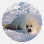 Perrito de foca de Groenlandia Etiquetas Redondas