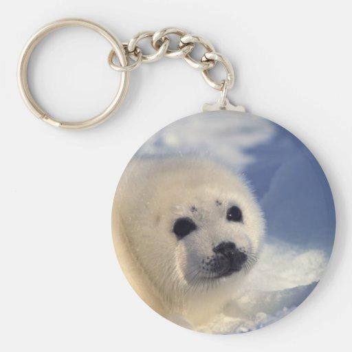 Perrito de foca de Groenlandia Llavero Redondo Tipo Pin