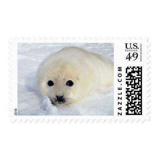 Perrito de foca de Groenlandia mullido Estampillas