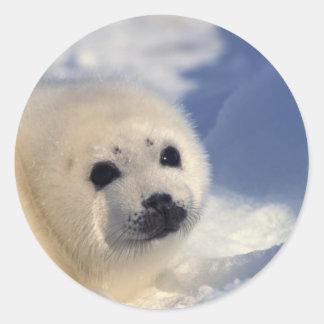Perrito de foca de Groenlandia Pegatina Redonda