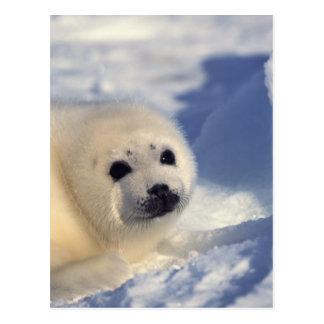 Perrito de foca de Groenlandia Postal