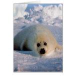 Perrito de foca de Groenlandia Tarjeta