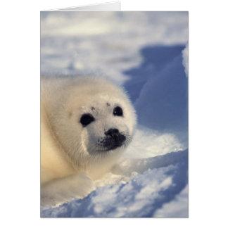 Perrito de foca de Groenlandia Felicitacion