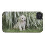 Perrito de Goldendoodle que se sienta debajo de hi iPhone 4 Case-Mate Carcasas