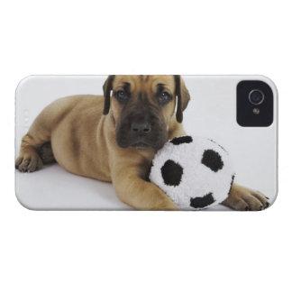 Perrito de great dane con el balón de fútbol del Case-Mate iPhone 4 protector