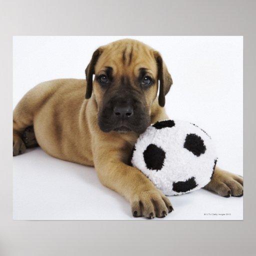 Perrito de great dane con el balón de fútbol del j poster