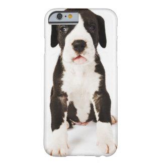 Perrito de great dane del Harlequin en el fondo Funda Para iPhone 6 Barely There