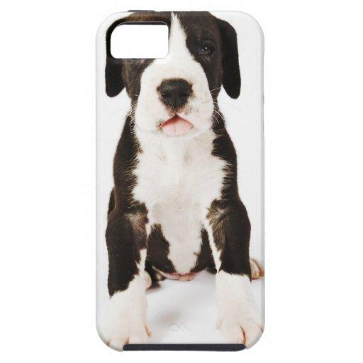 Perrito de great dane del Harlequin en el fondo iPhone 5 Carcasa