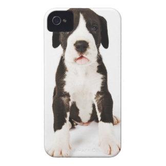 Perrito de great dane del Harlequin en el fondo iPhone 4 Case-Mate Funda