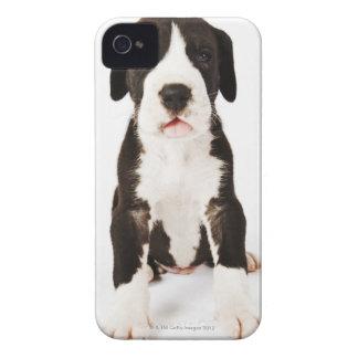 Perrito de great dane del Harlequin en el fondo Case-Mate iPhone 4 Cárcasas
