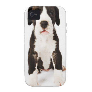 Perrito de great dane del Harlequin en el fondo Vibe iPhone 4 Carcasa