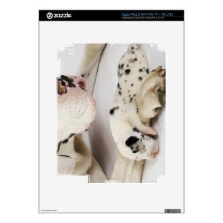 Perrito de great dane del Harlequin que duerme en  Pegatina Skin Para iPad 3