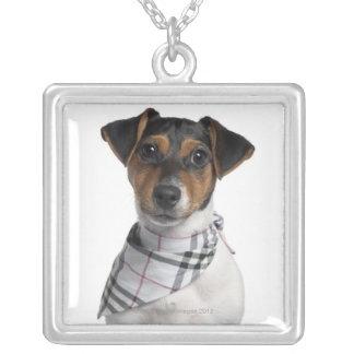 Perrito de Jack Russell Terrier (4 meses) Pendientes