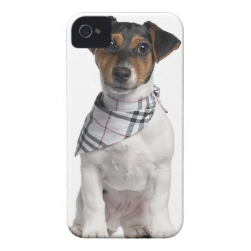 Perrito de Jack Russell Terrier (4 meses) Case-Mate iPhone 4 Coberturas