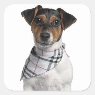 Perrito de Jack Russell Terrier (4 meses) Pegatina Cuadrada