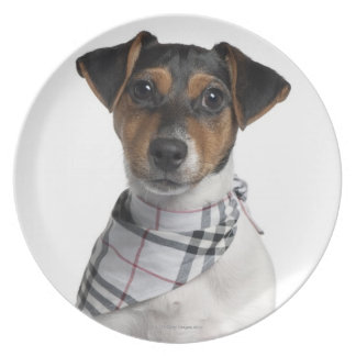 Perrito de Jack Russell Terrier (4 meses) Plato De Cena