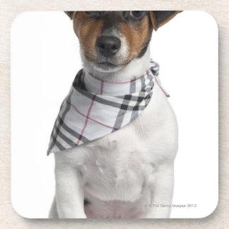 Perrito de Jack Russell Terrier (4 meses) Posavasos De Bebidas