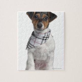 Perrito de Jack Russell Terrier (4 meses) Puzzle Con Fotos