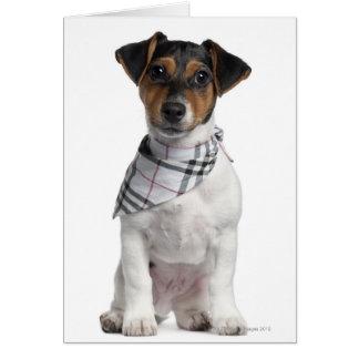 Perrito de Jack Russell Terrier (4 meses) Tarjeta De Felicitación