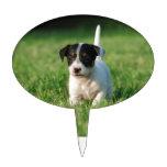 Perrito de Jack Russell Terrier Decoración De Tarta