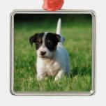 Perrito de Jack Russell Terrier Adornos De Navidad