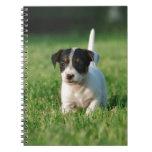 Perrito de Jack Russell Terrier Cuadernos