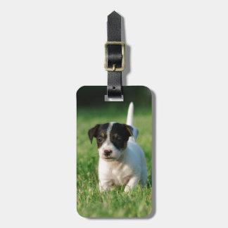 Perrito de Jack Russell Terrier Etiquetas Bolsas