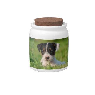 Perrito de Jack Russell Terrier Platos Para Caramelos
