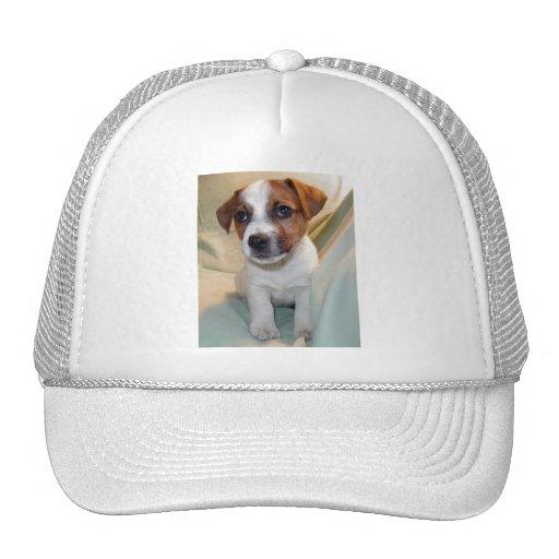 Perrito de Jack Russell Terrier Gorro