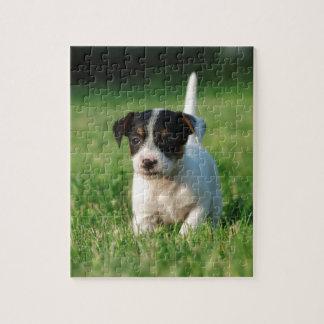 Perrito de Jack Russell Terrier Puzzles Con Fotos
