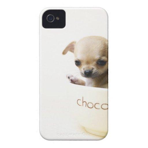 Perrito de la chihuahua en el cuenco (cosechado) carcasa para iPhone 4 de Case-Mate