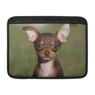 Perrito de la chihuahua que mira la cámara fundas para macbook air