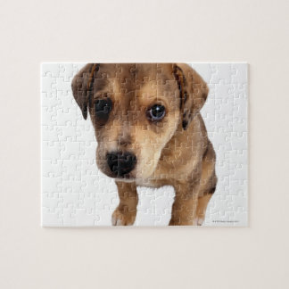 Perrito de la Mezclado-Raza Puzzle Con Fotos
