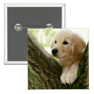 Perrito de Labrador que se sienta en un ajuste del Pin Cuadrado