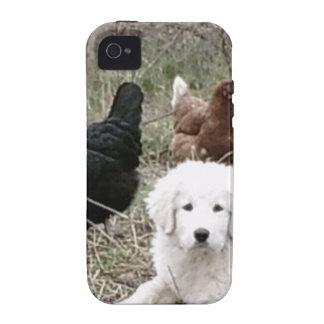 Perrito de los grandes Pirineos con los pollos lib Case-Mate iPhone 4 Carcasa