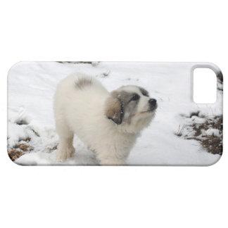 Perrito de los grandes Pirineos iPhone 5 Funda