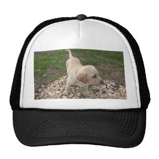 Perrito de oro de Labrador Gorros