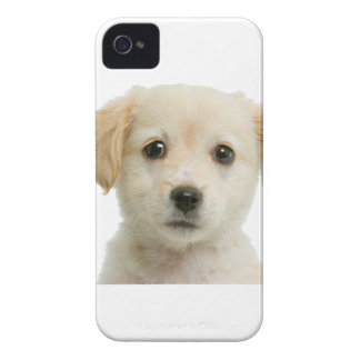 Perrito de oro del labrador retriever iPhone 4 carcasas