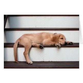 Perrito de oro el dormir tarjetón