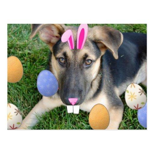 Perrito de Pascua del pastor alemán Postales